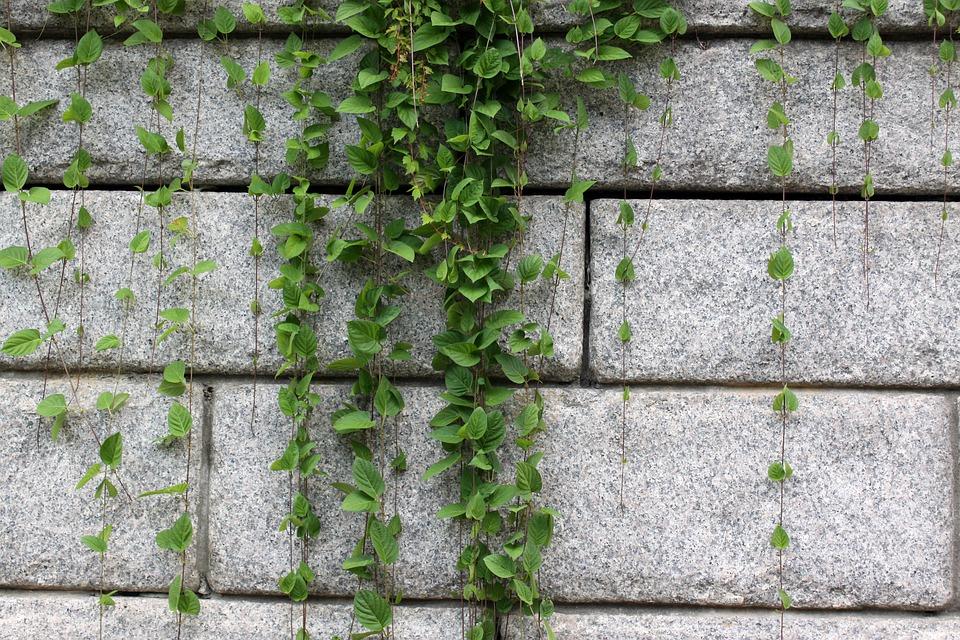 Co obnáší mít na zahradě betonový plot