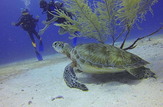 Potápění nemusí být jen snem