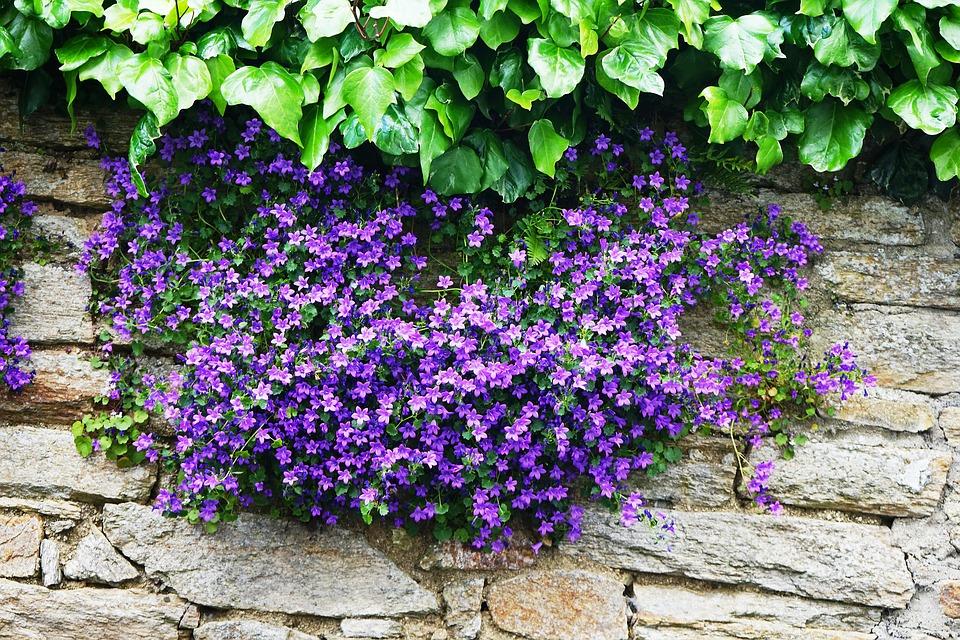 květiny na zdi